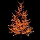 Деревья Клён