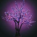 Деревья Сакура